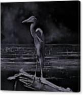 Blue Heron Pose Canvas Print