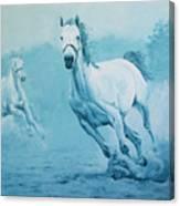Blue Horses Canvas Print