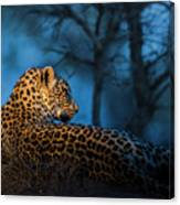 Blue Hour Leopard Canvas Print