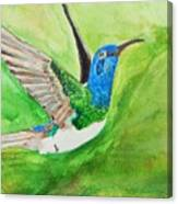 Blue Humming Bird Canvas Print