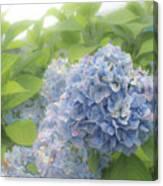 Blue Hydrangea At Rainy Garden In June, Japan Canvas Print