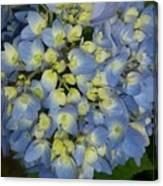 Blue Hydrangea Bouquet Canvas Print