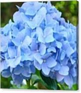Blue Hydrangea Floral Art Print Hydrangeas Flowers Baslee Troutman Canvas Print