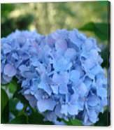 Blue Hydrangea Flower Art Prints Baslee Troutman Canvas Print