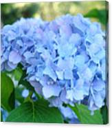 Blue Hydrangea Flowers Art Botanical Nature Garden Prints Canvas Print