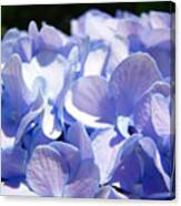 Blue Hydrangea Flowers Art Prints Baslee Troutman Canvas Print