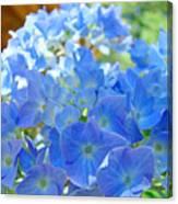 Blue Hydrangea Flowers Art Prints Summer Hydrangeas Baslee Canvas Print