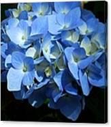 Blue Hydrangea II Canvas Print
