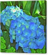 Blue Hydrangea In Bellingrath Gardens In Mobile, Alabama2 Canvas Print
