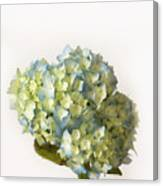 Blue Hydrangea Spray Canvas Print