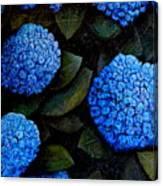 Blue Hydrangeas Canvas Print