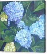 Blue Hydranges Canvas Print