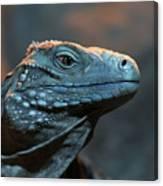 Blue Iguana Canvas Print