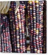 Blue Indian Corn Canvas Print