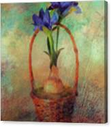 Blue Iris In A Basket Canvas Print