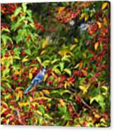 Blue Jay And Berries Canvas Print