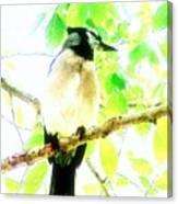 Blue Jay IIi Canvas Print
