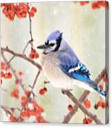 Blue Jay In Snowfall Canvas Print