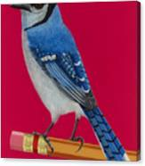 Bluejay Perched On Pencil Canvas Print