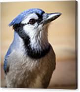 Blue Jay Portrait Canvas Print
