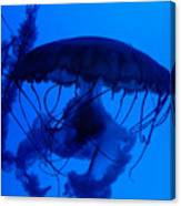 Blue Jelly Fish Canvas Print