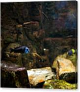 Blue Little Fish In Aquarium Canvas Print