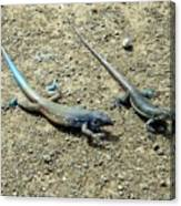 Blue Lizards Canvas Print