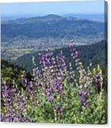 D3b6377-blue Lupine And Kenwood  Canvas Print