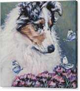 Blue Merle Collie Pup Canvas Print