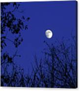Blue Moon Among The Tree Tops Canvas Print