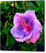 Blue Moon Hibiscus Canvas Print