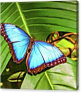 Blue Morpho Butterfly 2 - Paint Canvas Print