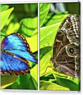 Blue Morpho Butterfly Diptych Canvas Print