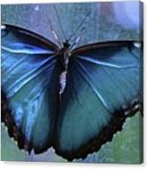 Blue Morpho Butterfly Portrait Canvas Print