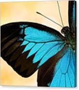 Blue Morpho Closeup Canvas Print