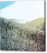 Blue Mountain Scrub Canvas Print