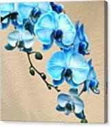 Blue Mystique Orchid Canvas Print