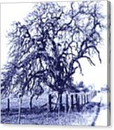 Blue Oak Canvas Print
