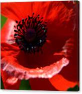 Blue On Red Poppy Canvas Print