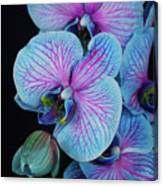 Blue Orchid On Black Canvas Print
