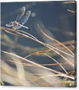 Blue Pond Canvas Print