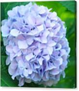 Blue Purple Hydrandea Floral Art Botanical Prints Canvas Canvas Print