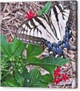 Blue Ridge Butterfly Canvas Print