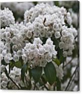 Blue Ridge Mountain Laurel Canvas Print