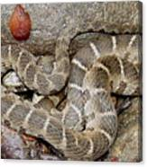 Montreat Water Snake Canvas Print