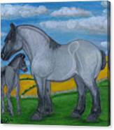 Blue Roan Mare With Her Colt Canvas Print