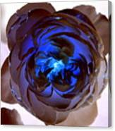 Blue Rose Glow Canvas Print