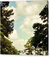 Blue Skies And Pines Canvas Print