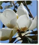 Blue Skies Magnolia Canvas Print