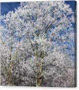 Blue Sky and Ice Trees Canvas Print